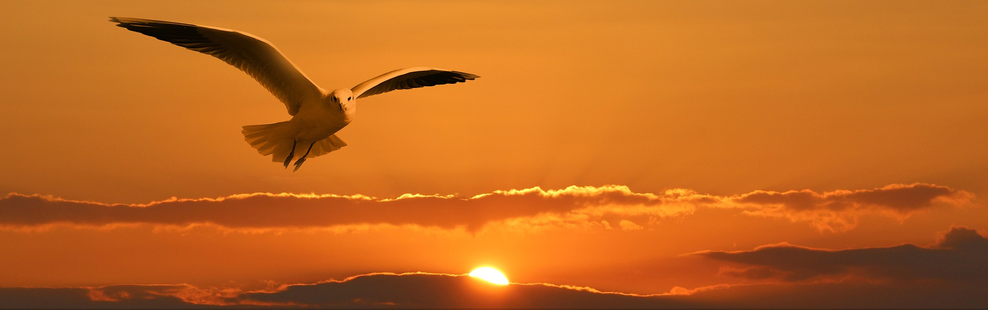 volare liberta